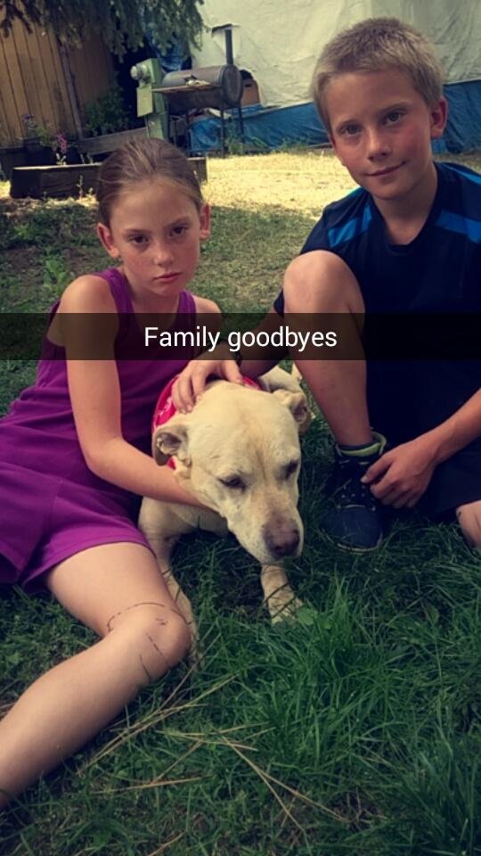 ostatni dzień psa (3)