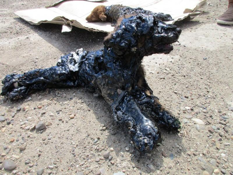 psy w smole (2)