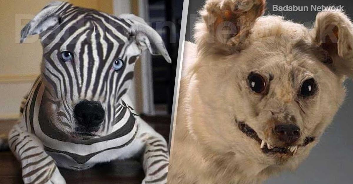 Rasy psów, które niestety już wyginęły. Niektóre żywiły się również ludźmi