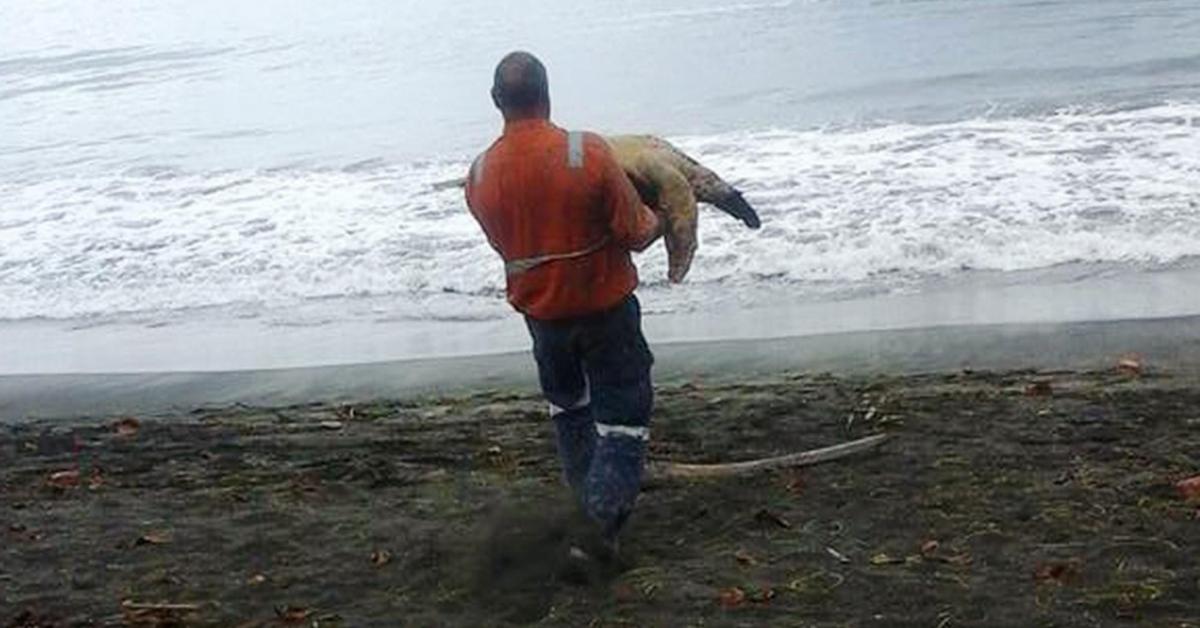 Mężczyzna kupił 2 żółwie na targu spożywczym. Zaraz po tym zabrał je prosto nad morze