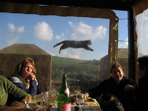 42 zdjęcia, które zostały zrujnowane przez zabawne zwierzaki domagające się uwagi