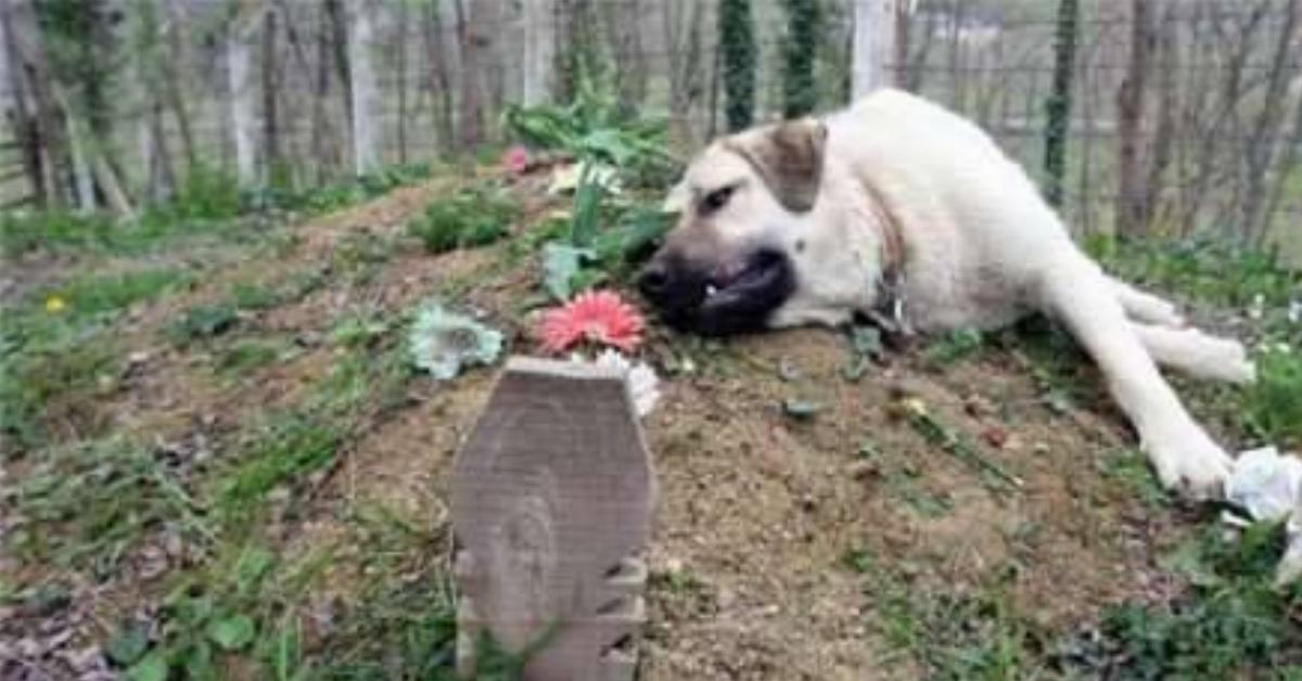 Właściciel tego psa zmarł, ale zwierzę nie zapomniało, kto jest jego najlepszym przyjacielem…