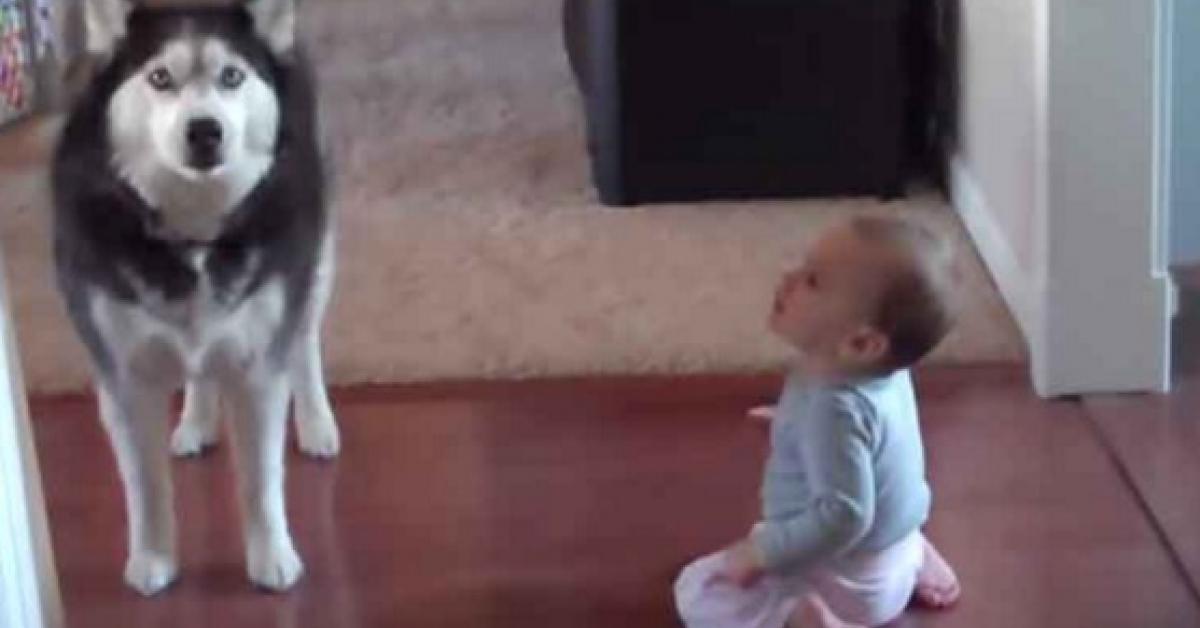 Rodzice uchwycili na nagraniu uroczą rozmowę dziecka z psem. Kto wyszedł zwycięsko z pojedynku?