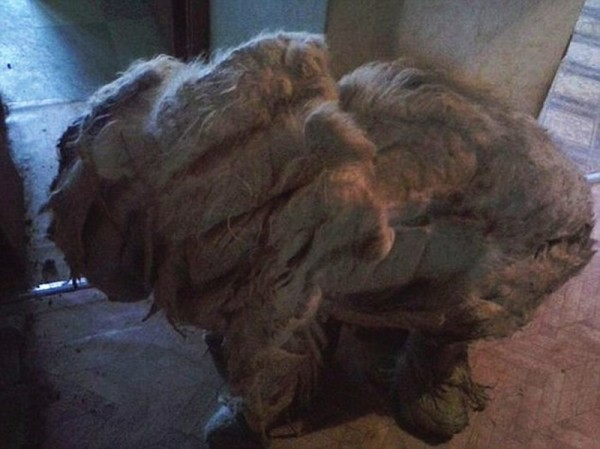 Under This Hairy Monster Is A Once Loved Pet Dog