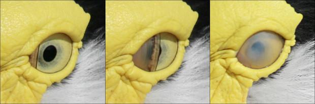 oczy-1