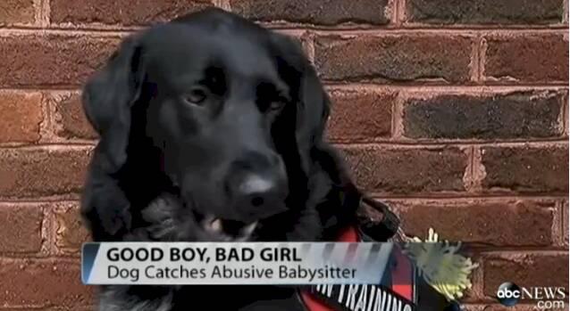 pies-ratuje-dziecko2