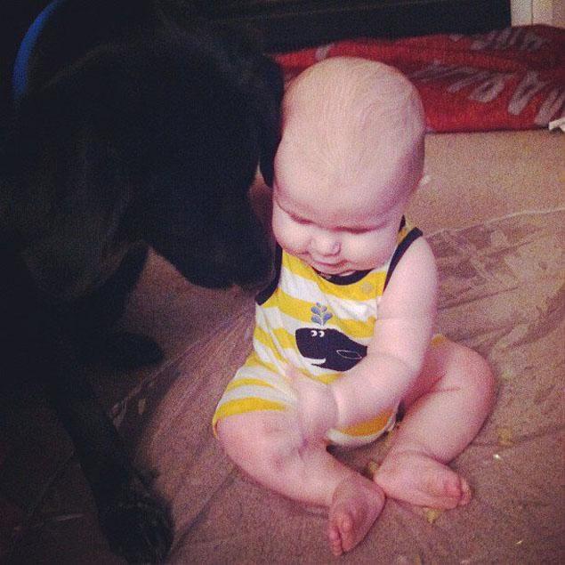pies-ratuje-dziecko5