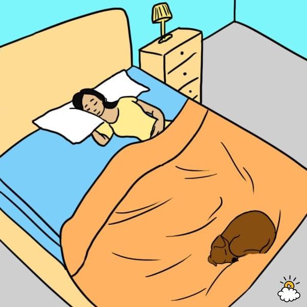 pies-w-lozku-1
