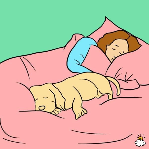 pies-w-lozku-2