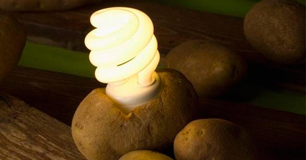 Ziemniaki alternatywnym źródłem energii? Jak się okazuje, jest to całkiem możliwe