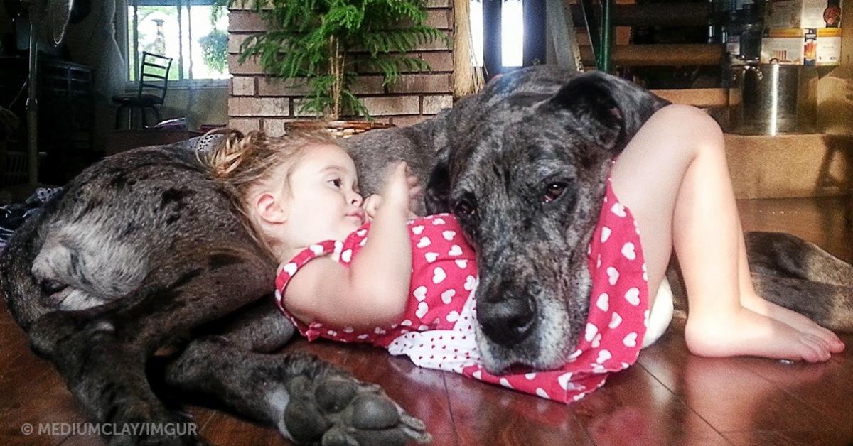 Te cudowne zdjęcia są dowodem na to, że pies jest najlepszym przyjacielem człowieka
