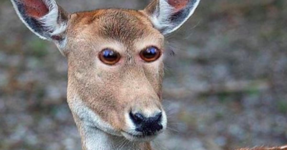 Te zdjęcia pokazują, jak wyglądałyby zwierzęta, gdyby miały oczy umieszczone z przodu głowy