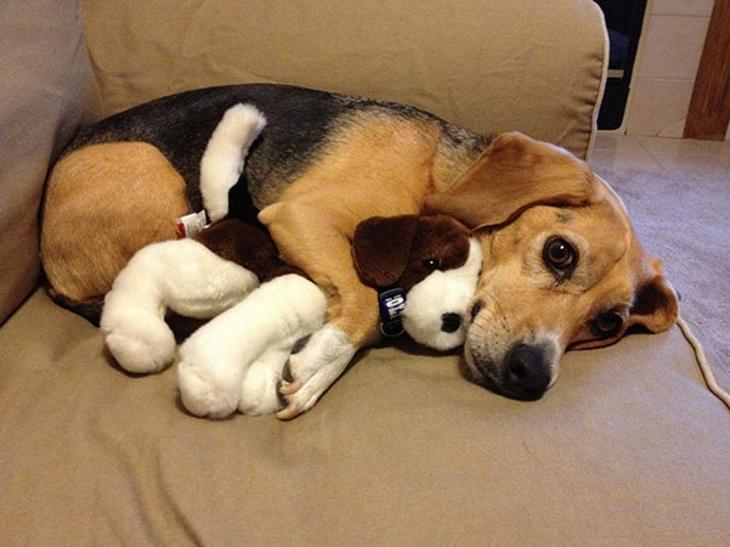 Nasze psy czasami dziwnie się zachowują. Takie sytuacje da się łatwo wytłumaczyć