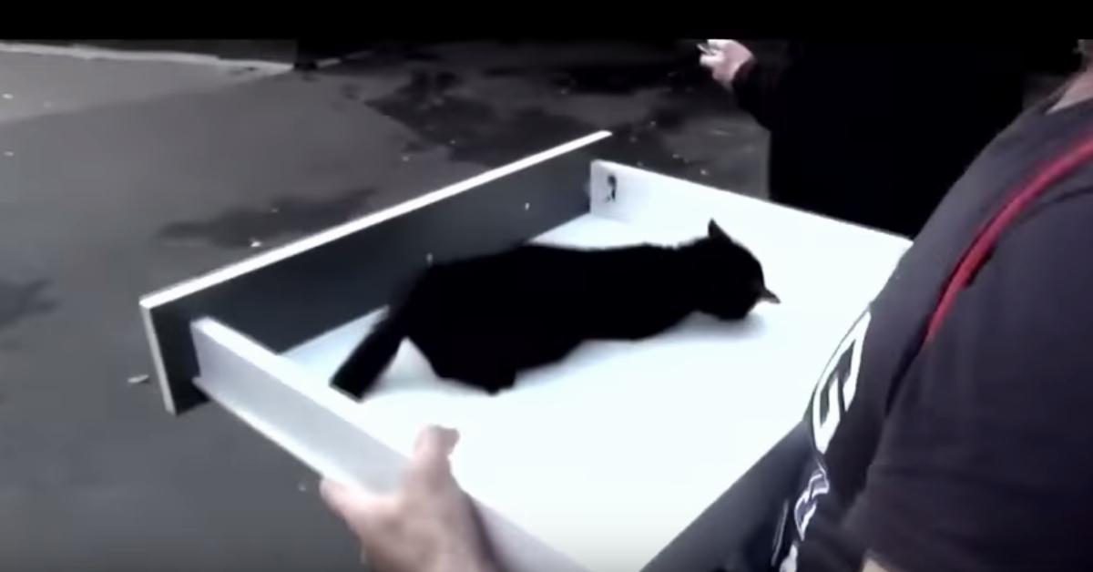 Maleńki kot umierał na ulicy. Na jego drodze pojawili się ludzie, którym jego los nie był obojętny