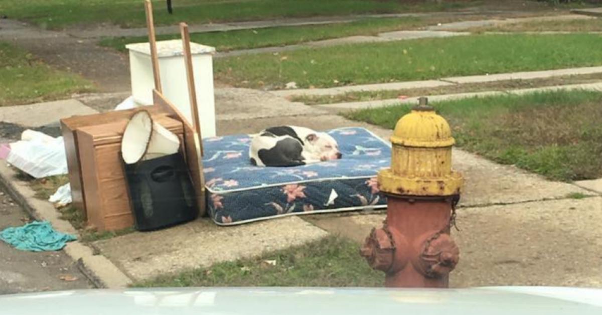 Rodzina musiała się przeprowadzić. Wraz ze śmieciami, zostawiła przed domem swojego psa…