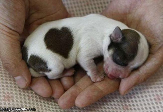 22 urocze szczeniaki, które z pewnością skradną Twoje serce. Dzień od razu staje się piękniejszy