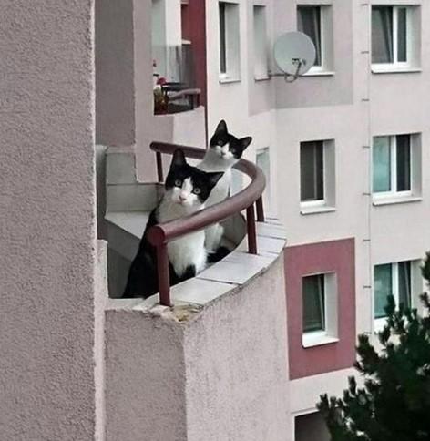 14 najlepszych zdjęć kotów znalezionych w sieci, które natychmiast poprawiają humor