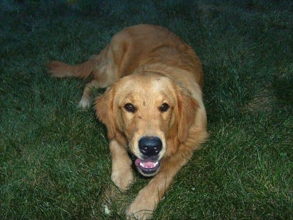 Obcy pies codziennie przychodził do jej domu na drzemkę. Pewnego dnia przy obroży znalazła liścik