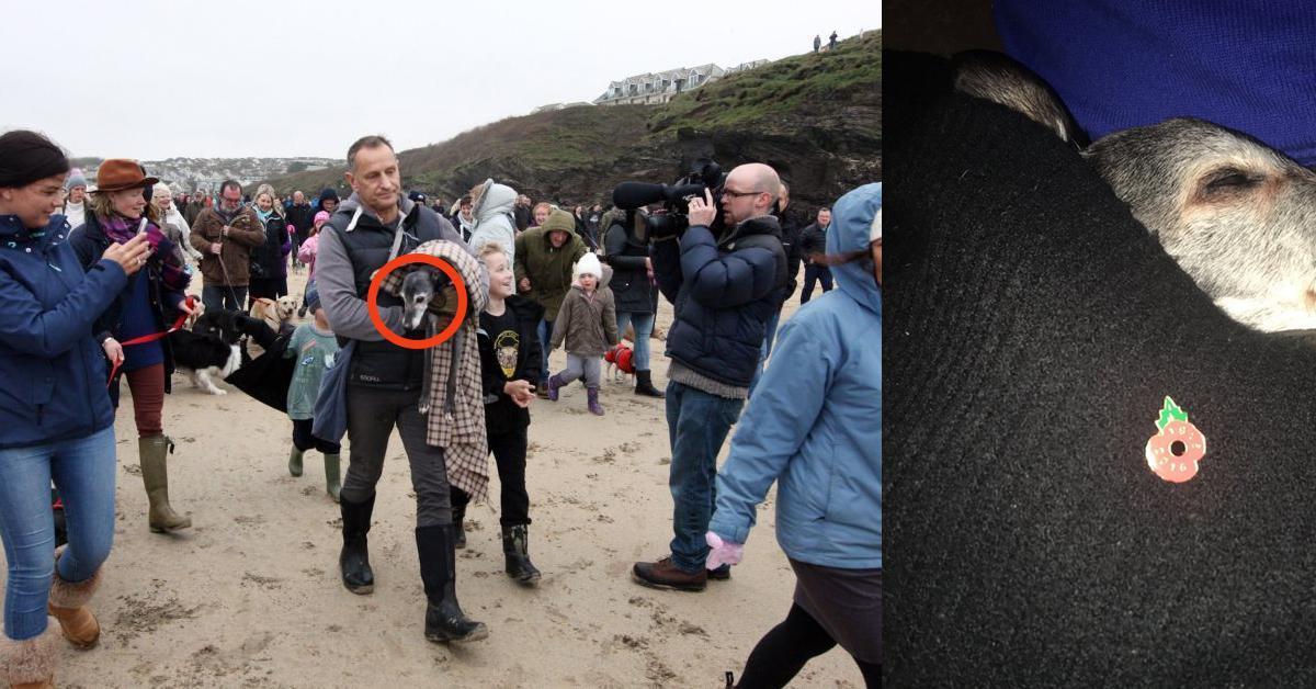 Zabrał konającego psa ostatni raz na plażę. Nie myślał, że będzie im towarzyszyć taki tłum