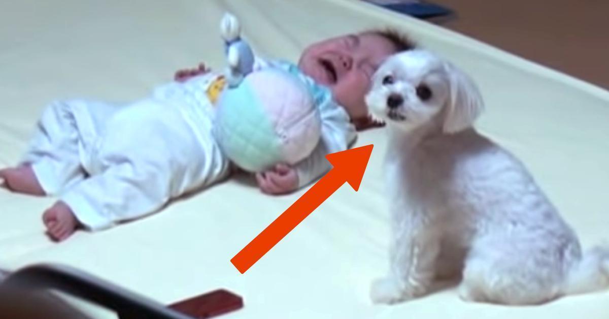 Bezradna mama kładzie płaczącego niemowlaka obok psa. To jak reaguje czworonóg, odbiera dziecku głos