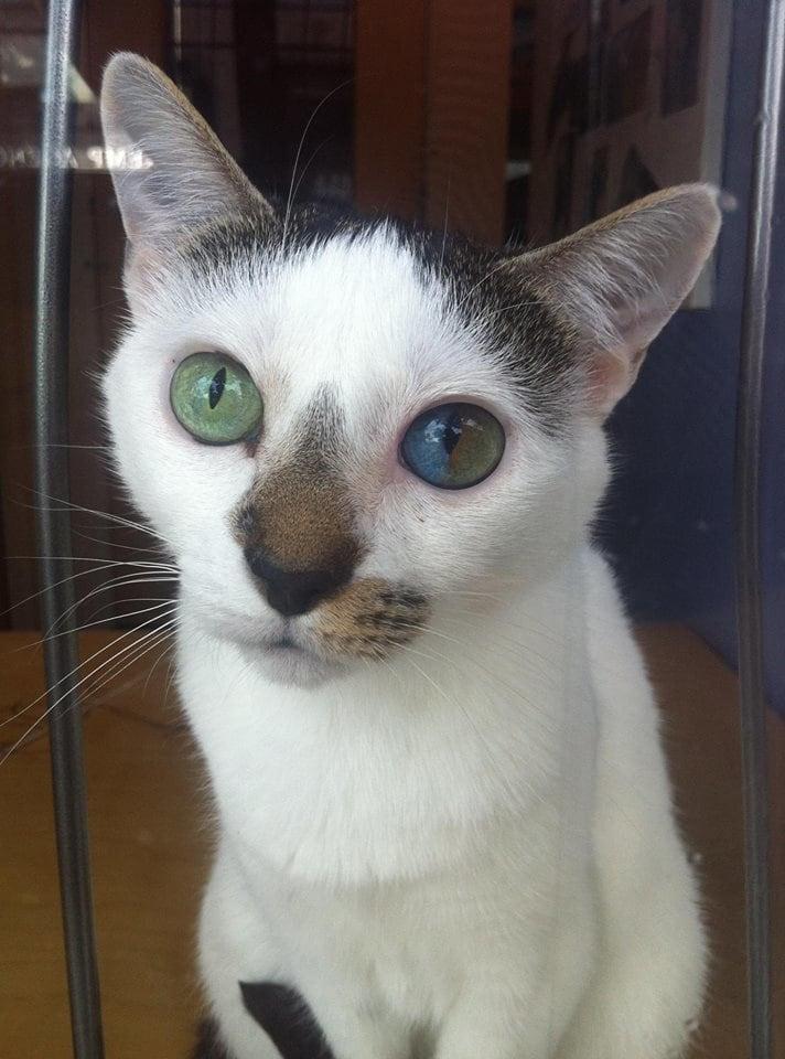heterochromia-1