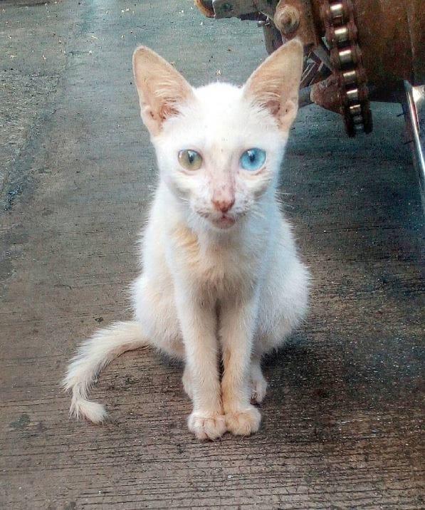 heterochromia-5
