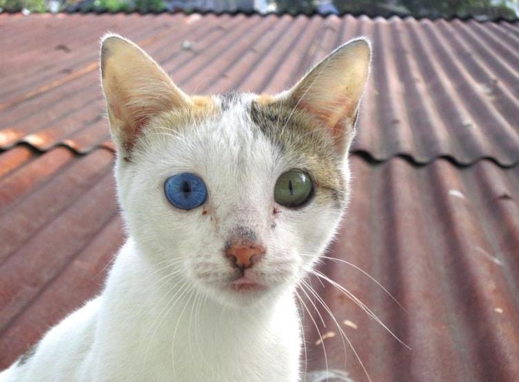 heterochromia-8