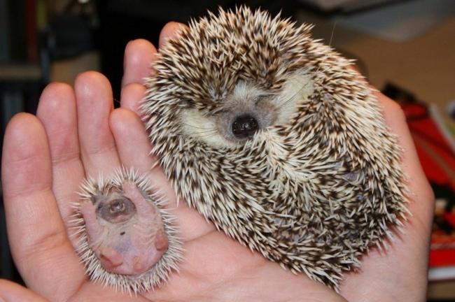 14 malutkich zwierząt, które dopiero co się urodziły