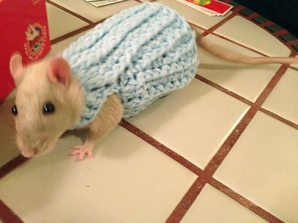 Maleńkie zwierzątka w uroczych sweterkach. Trudno się w nich nie zakochać