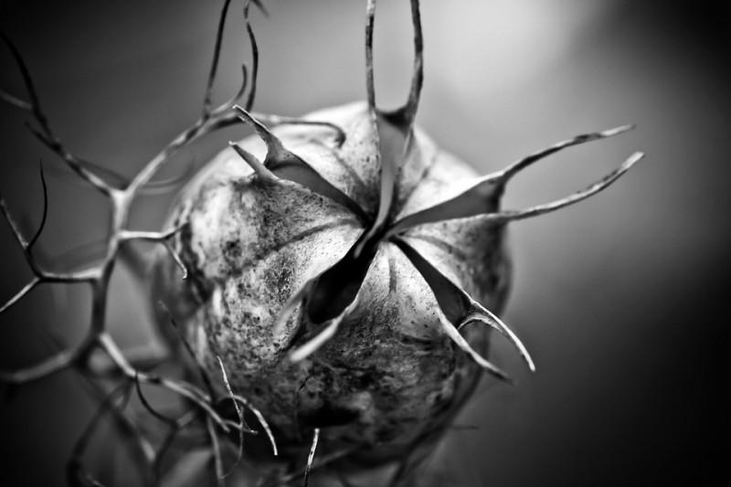 Ziarenka czarnuszki to babciny lek, który może uratować Ci życie