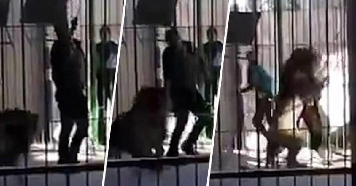 Lew podczas występu w cyrku atakuje jednego z pracowników. Wszystko dzieje się na oczach publiczności