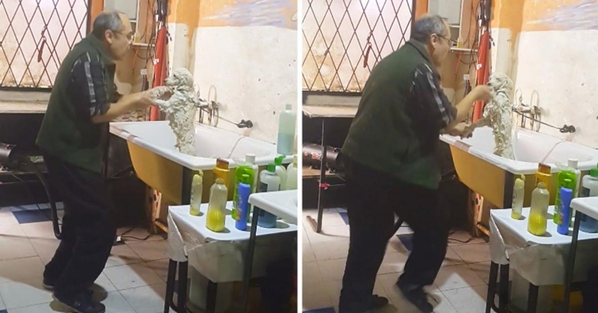 Kobieta po kryjomu nagrywa zachowanie pracownika w salonie dla psów