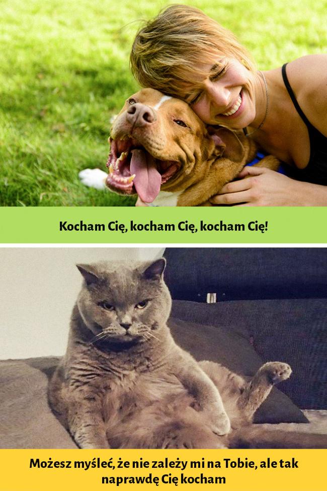 12 śmiesznych zdjęć, które udowadniają, że psy i koty pochodzą z zupełnie różnych światów