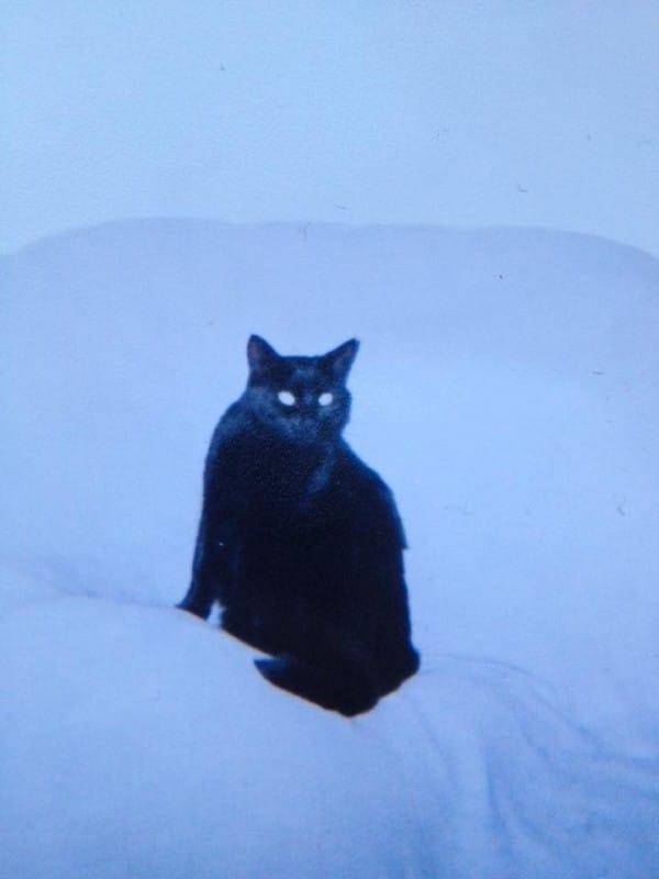 Przygarnął małego, czarnego kotka. 7 lat później jego sierść całkowicie zmieniła kolor