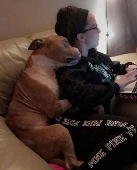 Adoptowała pobitego i skrzywdzonego pitbulla. Pies odwdzięczył się jej ogromną miłością