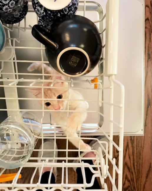 16 słodkich kociąt, które absolutnie nie są jeszcze gotowe na to, by dorosnąć
