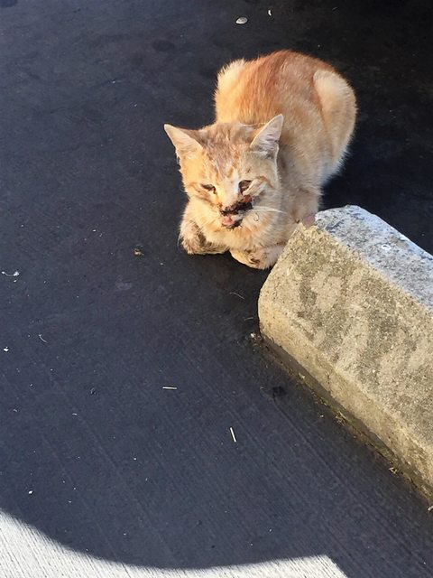 """Zauważyła na chodniku kota w przerażającym stanie. """"Chciało mi się krzyczeć!"""""""