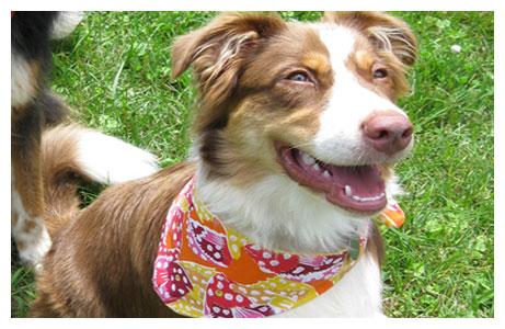 14 prostych trików, które ułatwią życie każdego opiekuna psa