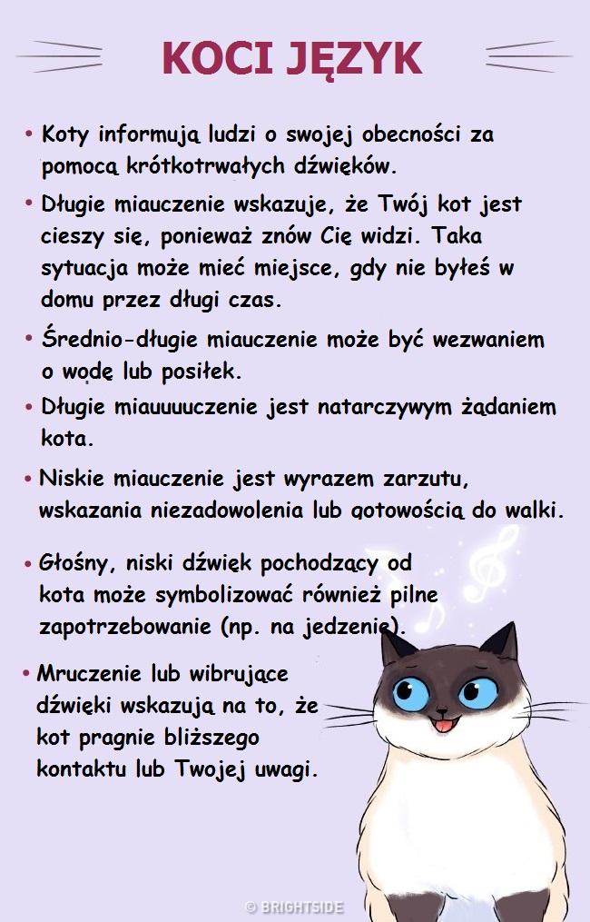 Te wskazówki pomogą Ci znaleźć wspólny język z Twoim kotem. To nie takie trudne!