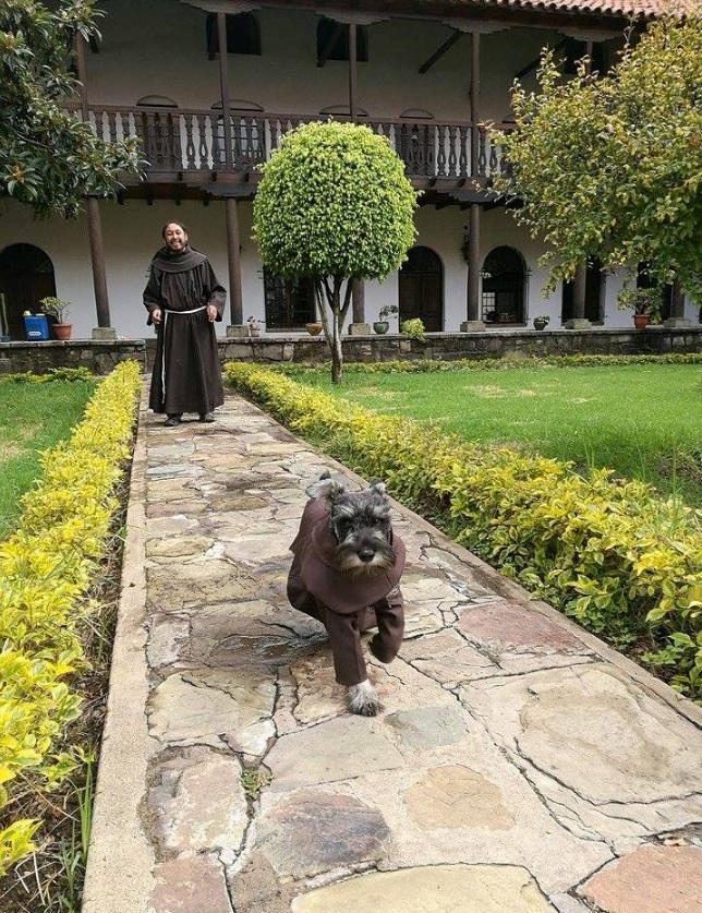 Bezpański pies dołączył do klasztoru jako kolejny zakonnik. Szybko zmienił oblicze tego miejsca