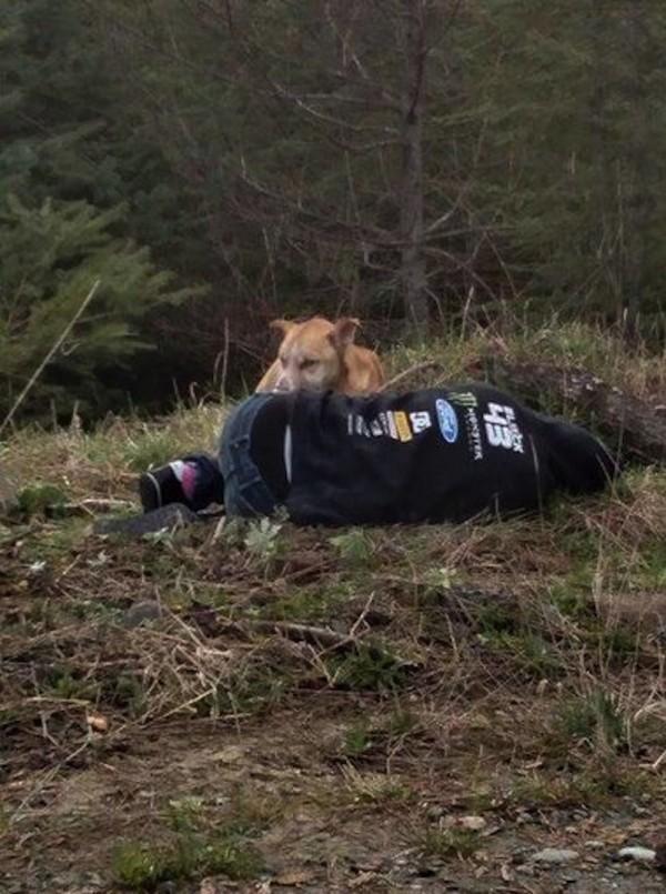 Bezdomny pies był agresywny wobec każdego. By go ocalić, zdecydowano się na ryzykowny krok