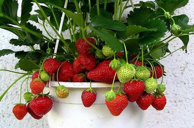 Oto 6 Owoców Które Możesz Uprawiać W Domu Ogród W Tym