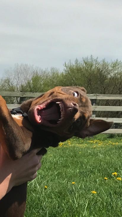 Chciała zrobić sobie urocze zdjęcie ze szczeniakiem. Pies miał jednak zupełnie inne plany