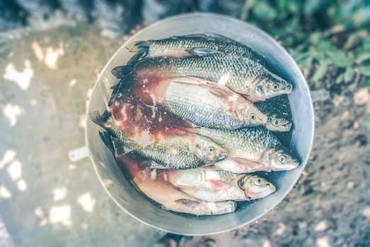 7 popularnych ryb, których nie powinno się jeśćw dużych ilościach. Wcale nie są takie zdrowe