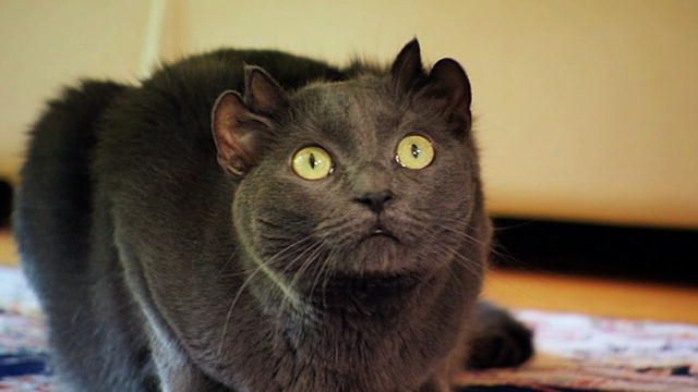 Czarny kocur trafił do schroniska. Tylko na pierwszy rzut oka wyglądał jak typowy kot