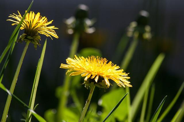 Ta pospolita, popularna roślina pomoże Ci w walce z infekcjami, a nawet rakiem
