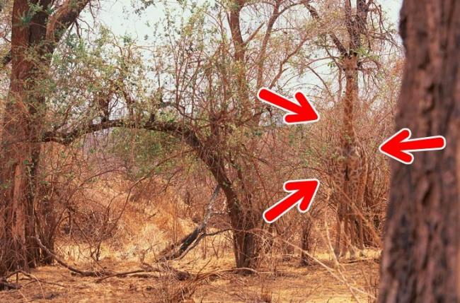 Na tych zdjęciach w sprytny sposób ukryły się zwierzęta. Sprawdź, czy uda Ci się je znaleźć!