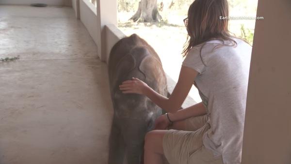 Słoniątko zostaje odrzucone przez stado. Popada w depresję, aż nieoczekiwanie się z kimś zaprzyjaźnia