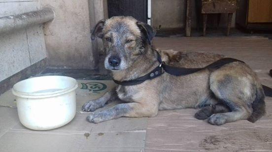 Odnaleźli psa pokrytego toksyczną smołą. Walczyli godzinami, aby go uratować