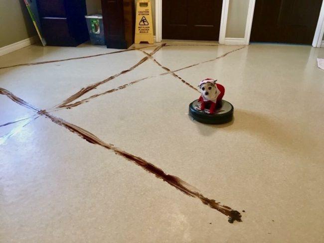 Oto, co się stanie, gdy odkurzacz automatyczny napotka psią kupę o pierwszej w nocy
